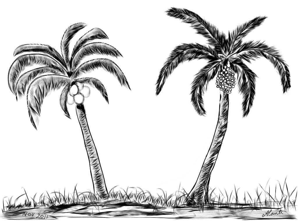 Palm Tree Drawings - Cliparts.co