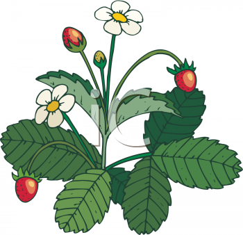 Strawberry Clip Art - Cliparts.co