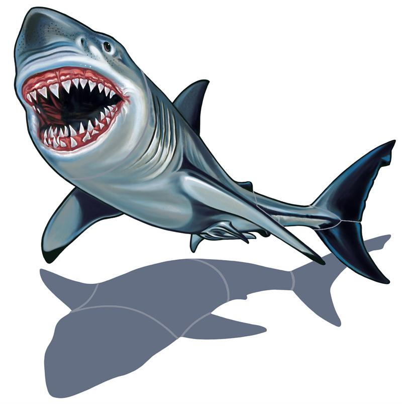 Great White Shark Clip Art - Cliparts.co