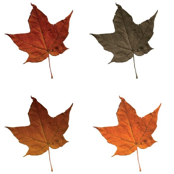 free clipart fall leaves - photo #45