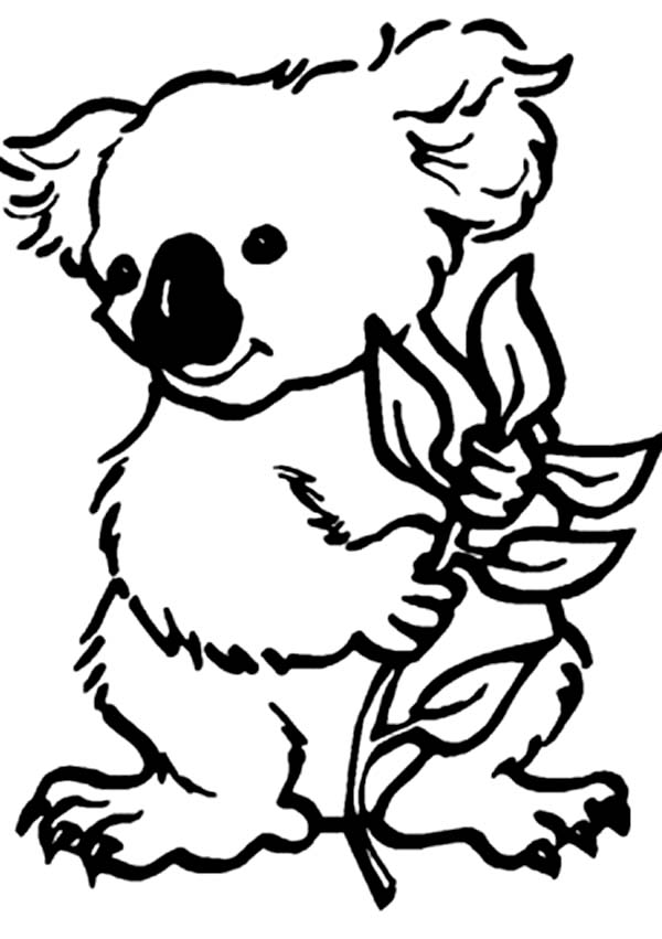 k is for koala bear coloring pages - photo #23