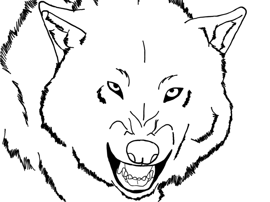 Realistic Drawings Of Wolves Growling Realistic   900 x 675 89 7Kb