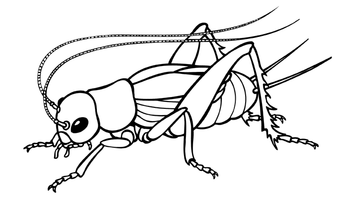 Praying Mantis Clipart Black And White