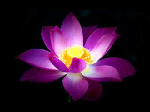Lotus Flower - YouTube