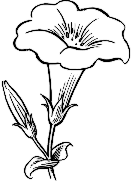 8 Petal Flower Template Clipartsco