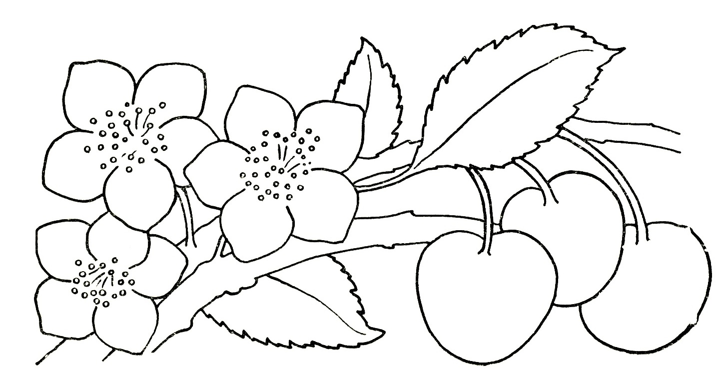 Flower Child Line Drawing : Pictures of flower drawings cliparts