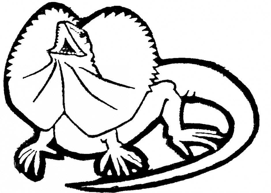 Reptiles Pictures