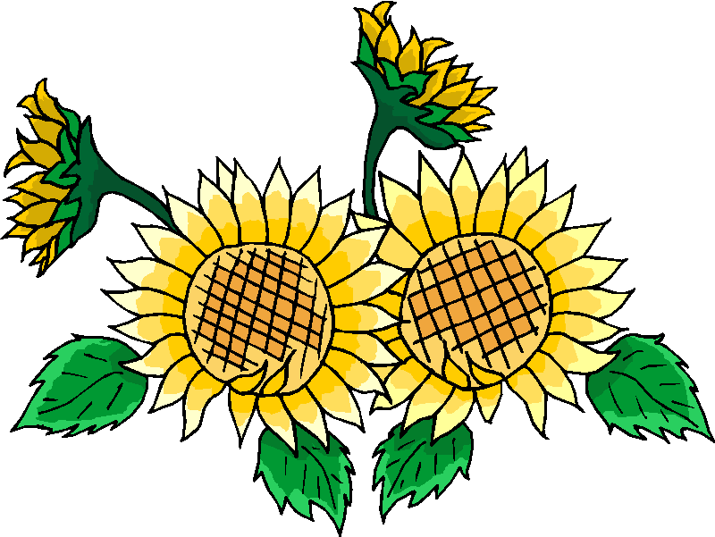 free black and white clip art sunflowers - photo #18