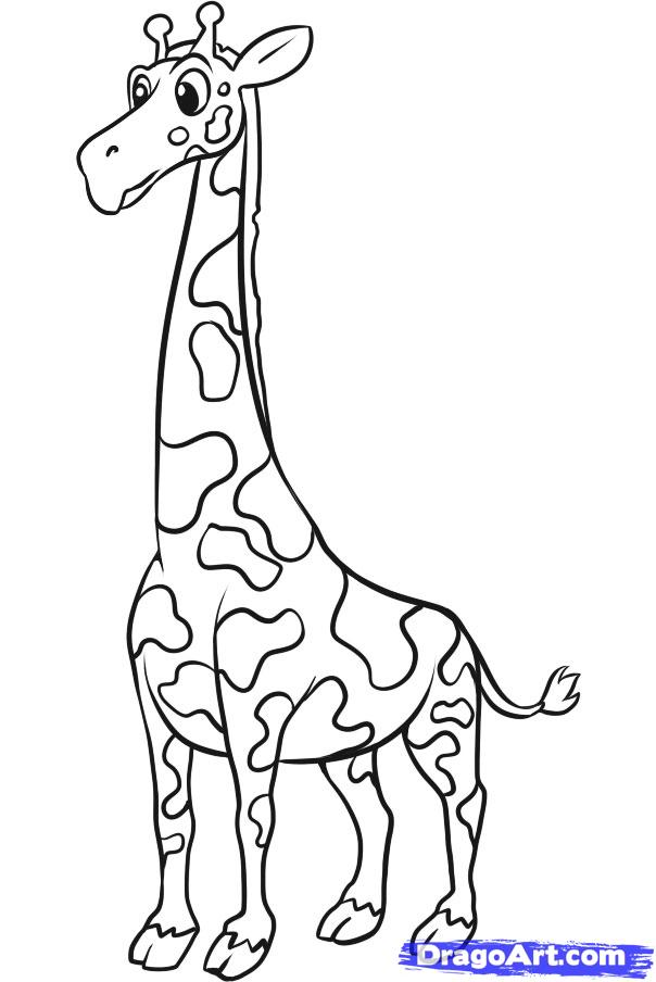 Line Art Giraffe : Giraffe line drawing cliparts
