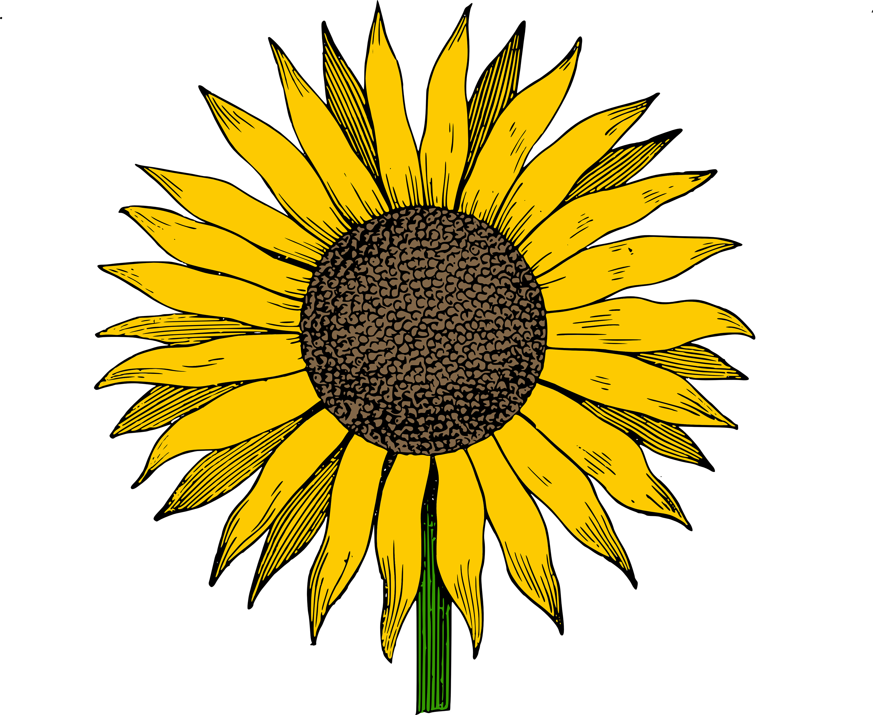 Flowers For > Sunflower Clip Art Vector