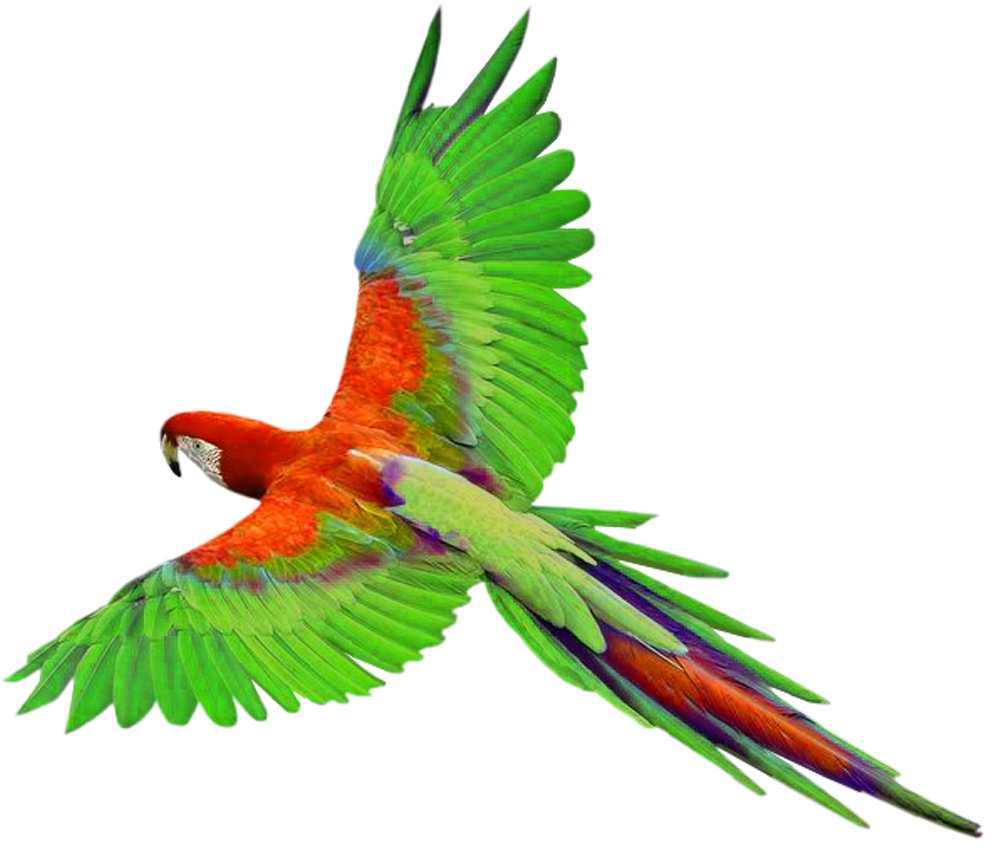 Parrot in Flight PNG Clipart