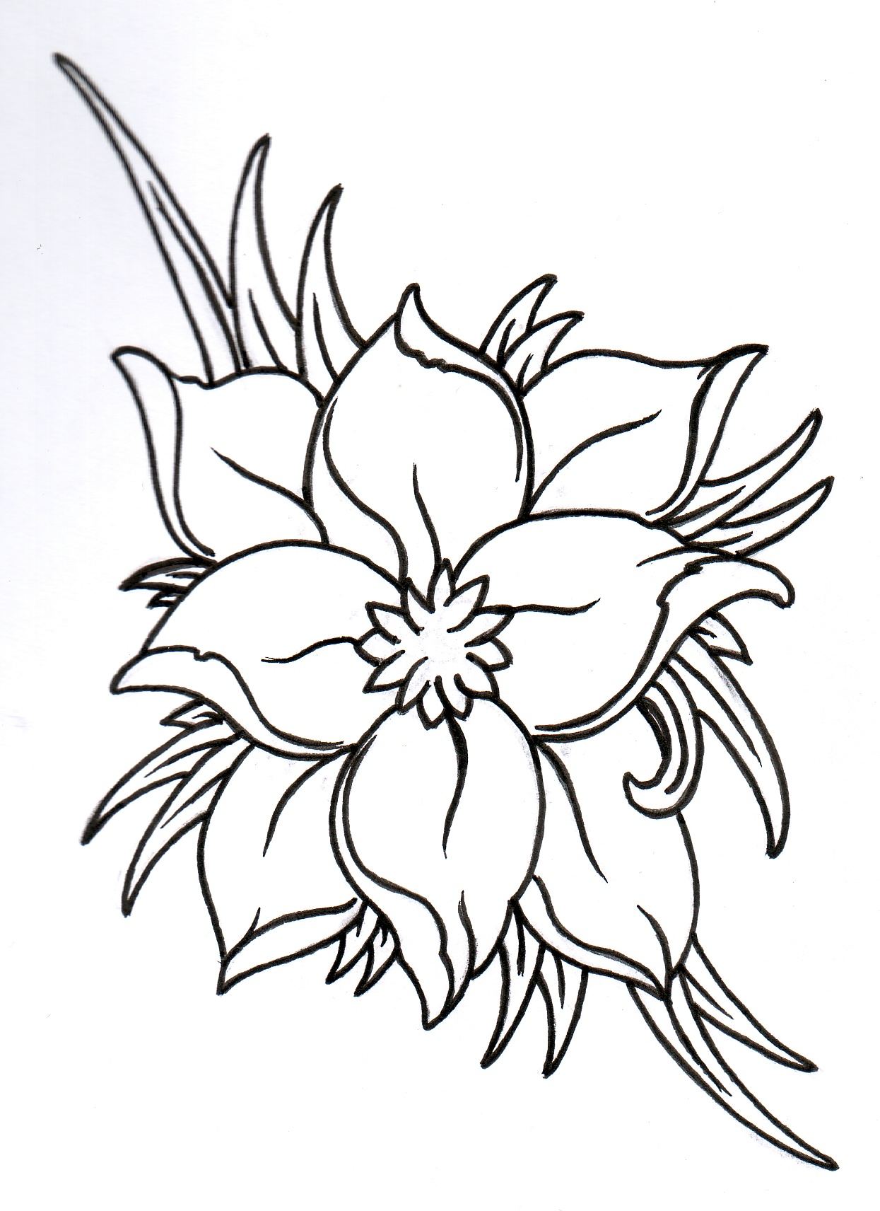 Flower Outline Cliparts