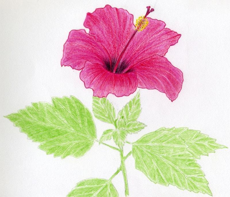 Drawings of flowers for Simple flower drawing tutorial