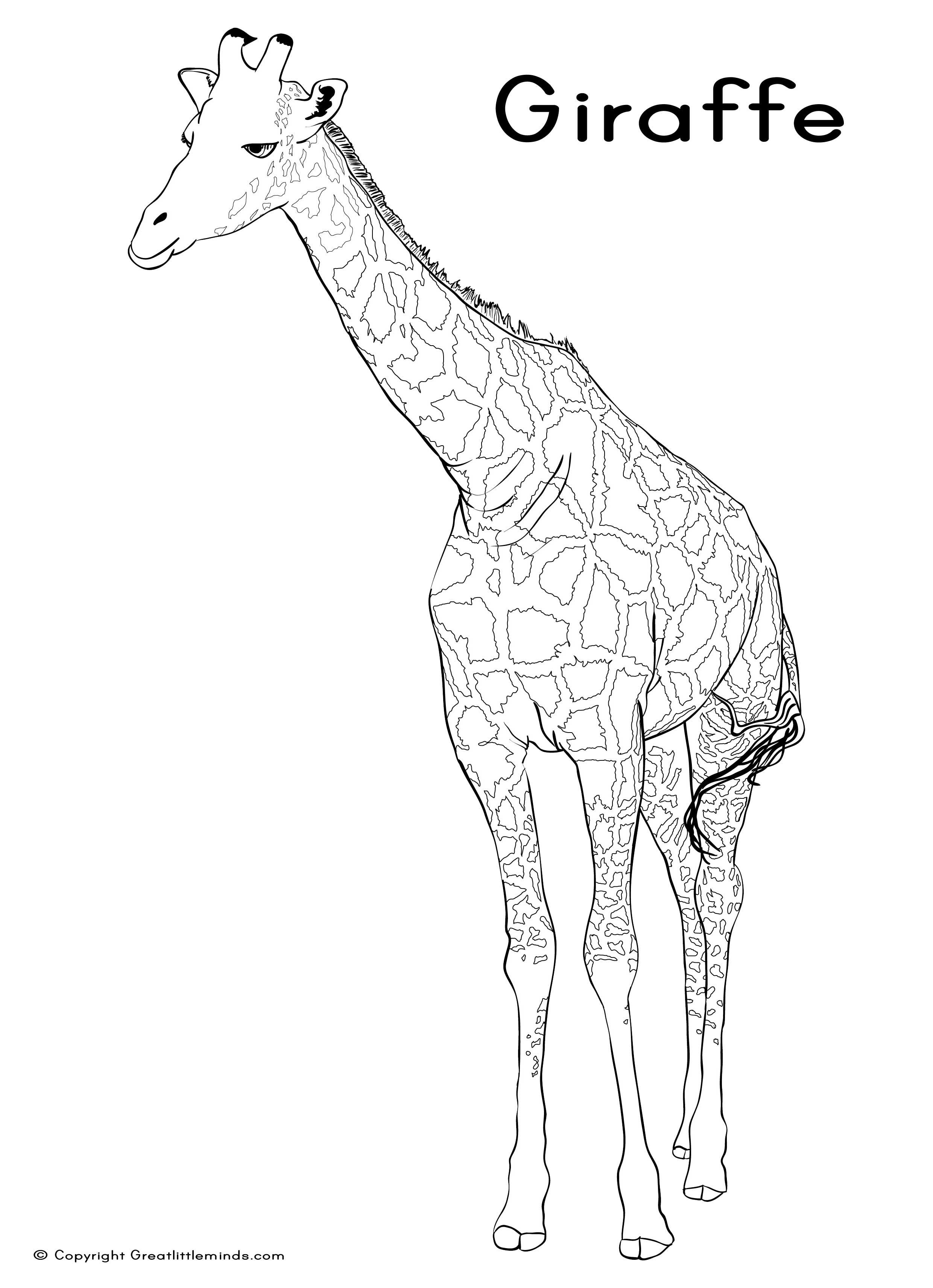 giraffe line drawing cliparts co