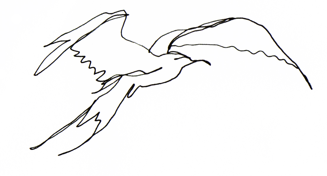 Simple Bird Line Art : Line drawing cliparts