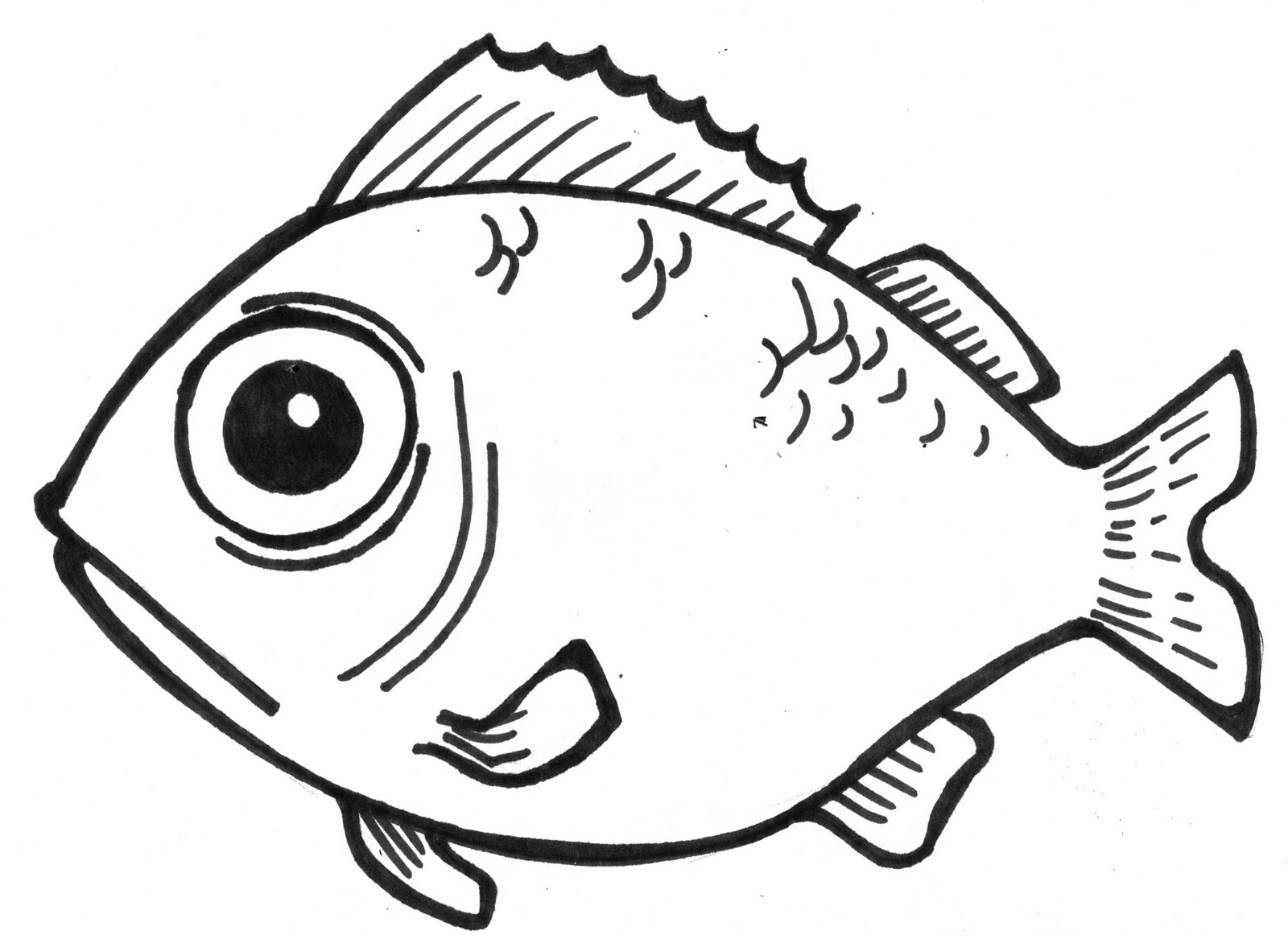Line Drawing Of Fish : Drawing of a fish with color imgkid the image