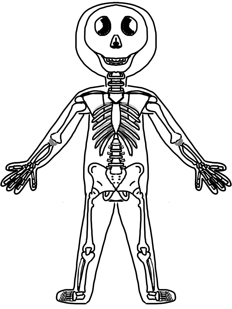 Skeleton Picture For Kids