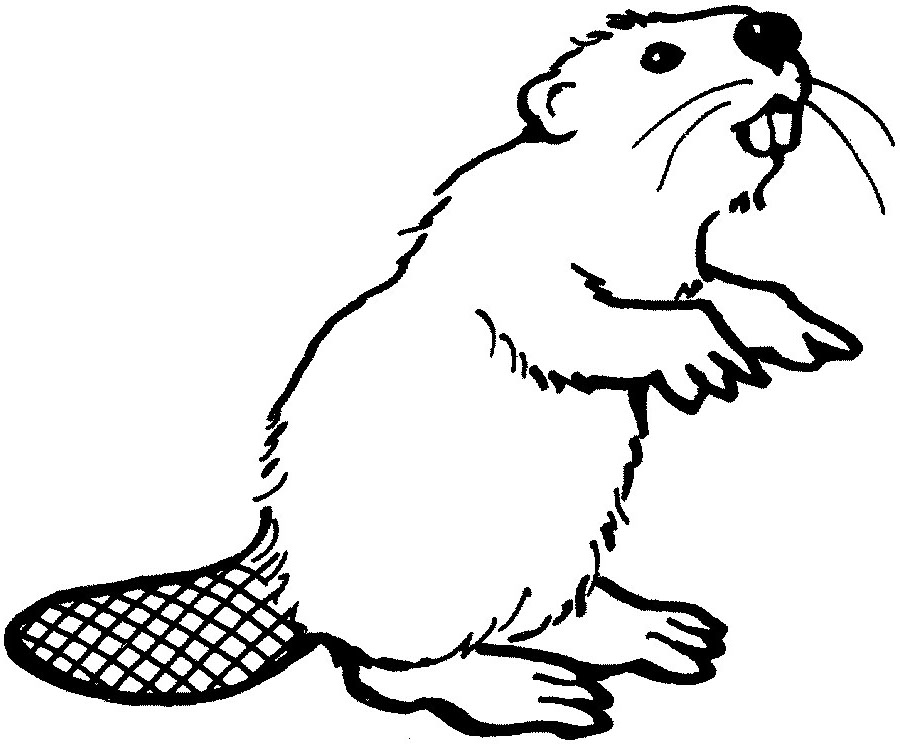 Beaver drawing outline - photo#3