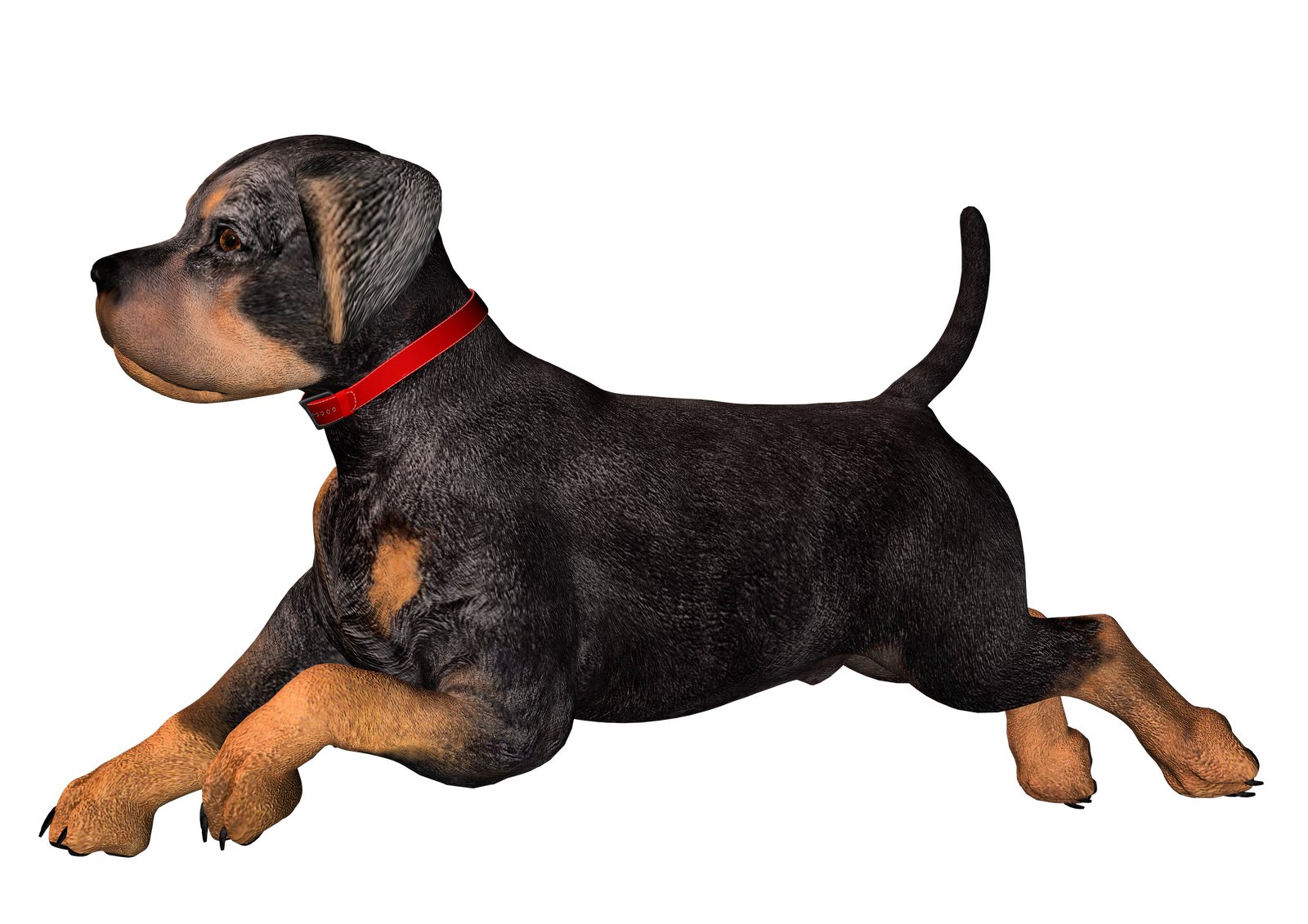 Free High Resolution Graphics And Clip Art: Dog Png ...