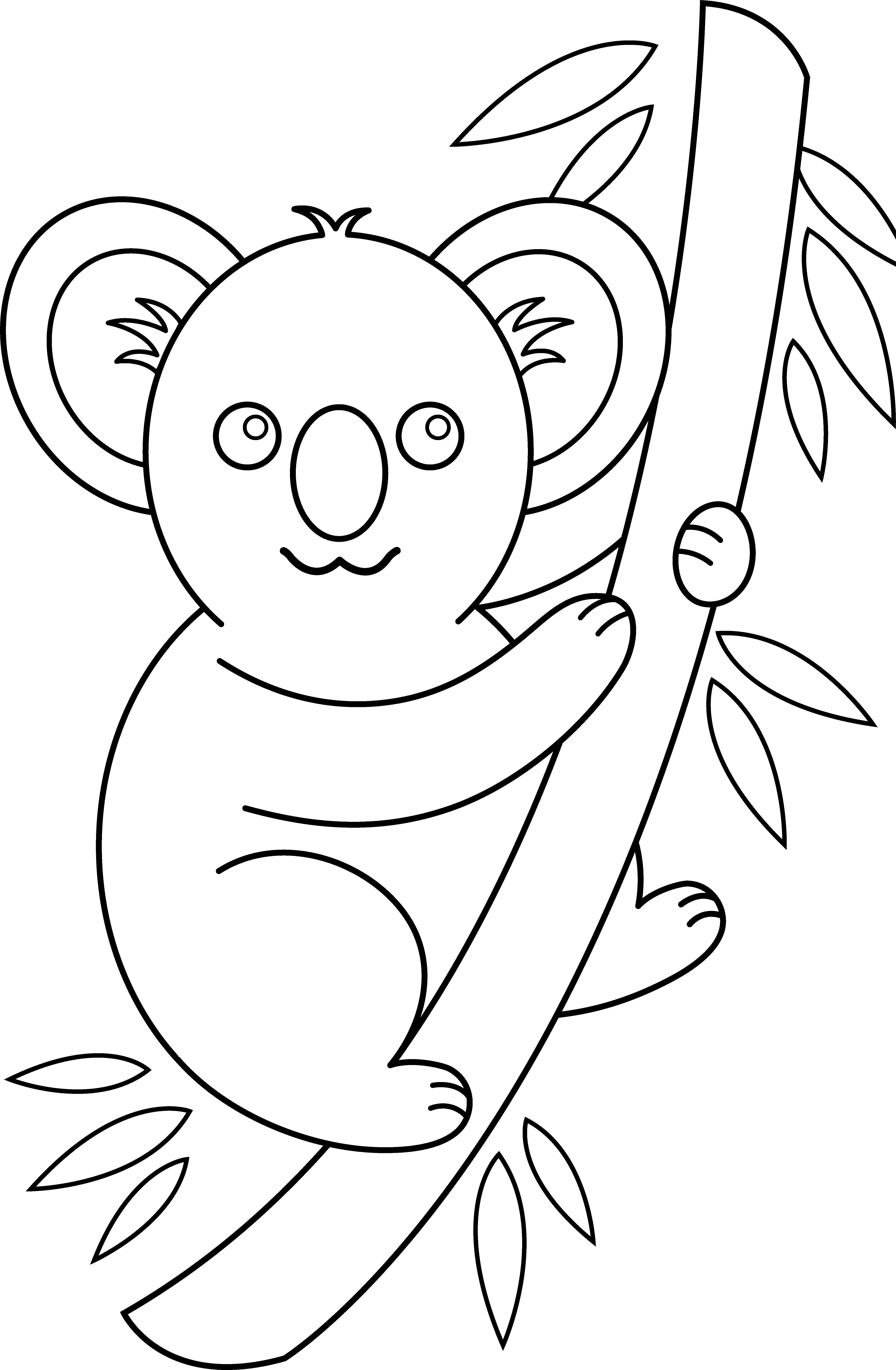Line Drawings Of Australian Animals : Cartoon koala pictures cliparts