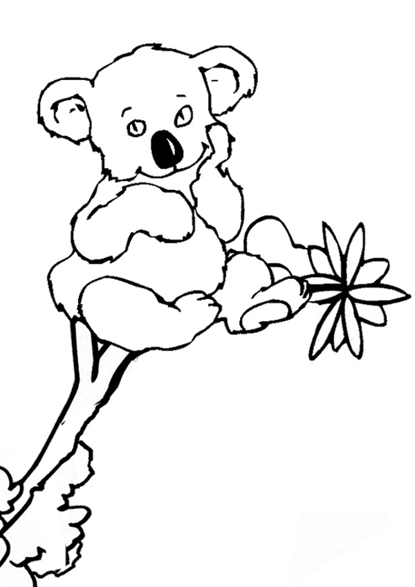 Cartoon Koala Pictures Clipartsco