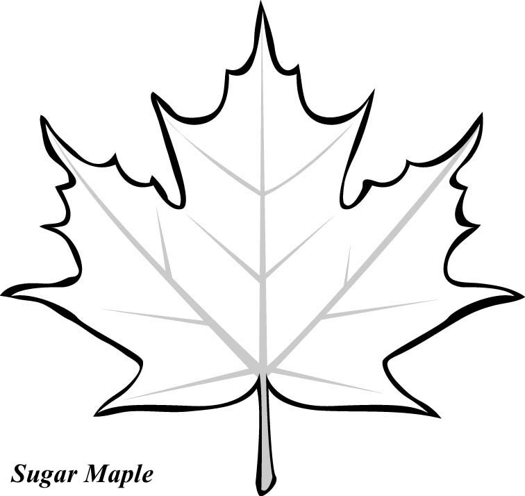 Pictures Of Maple Leaves