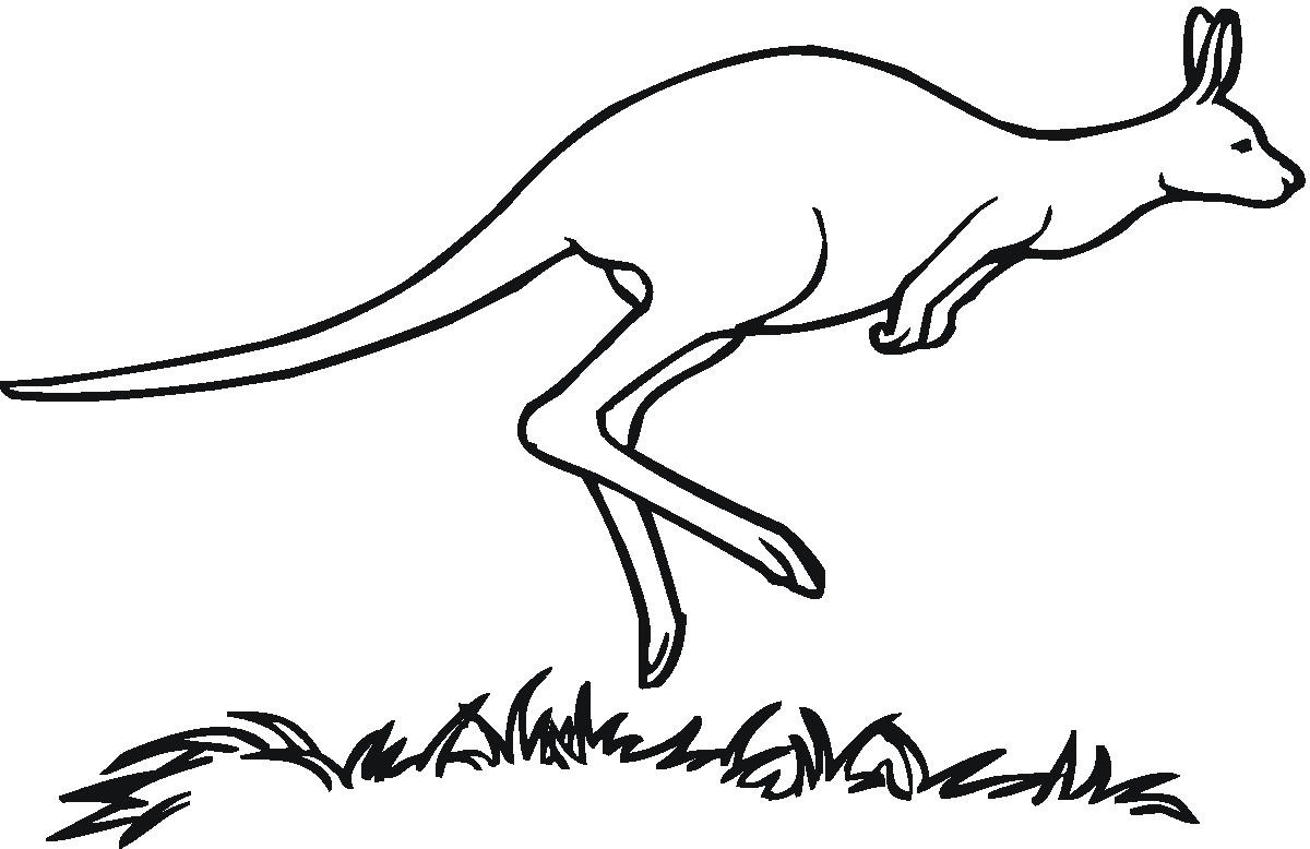 Kangaroo drawing outline - photo#3