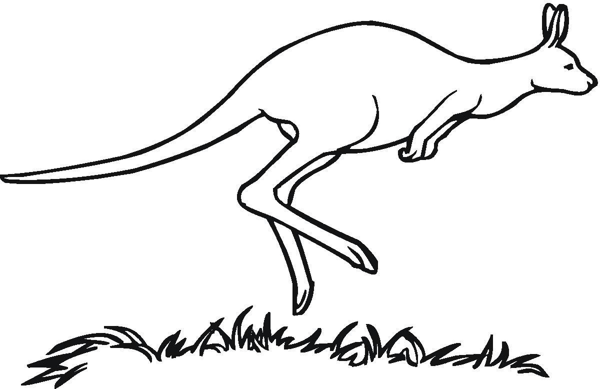 Line Drawing Kangaroo : Pix for gt kangaroo drawing outline cliparts