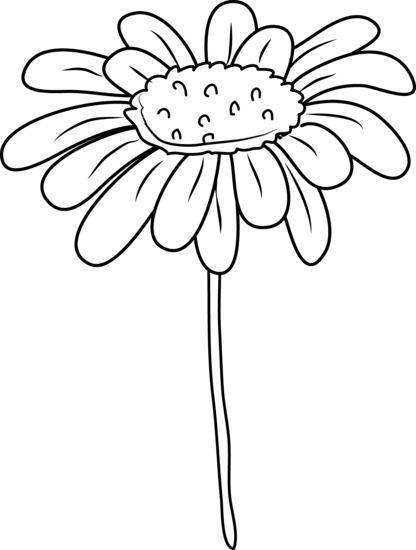 Daisy Flower Outline