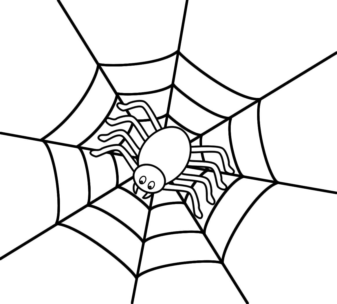 Spider Web Graphic Organizer