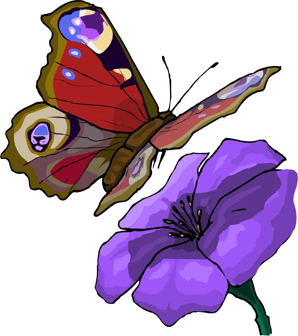 cartoon butterfly images