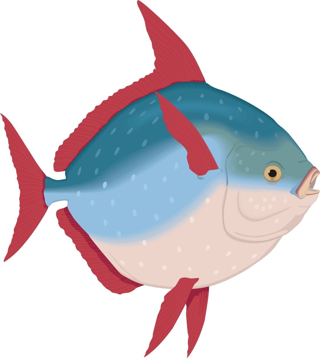 Fish cartoons for Cartoon fish pictures
