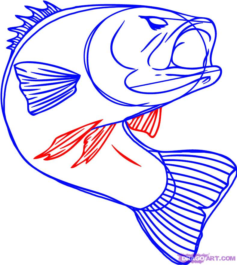 How to draw how to draw fish for kids  Hellokidscom