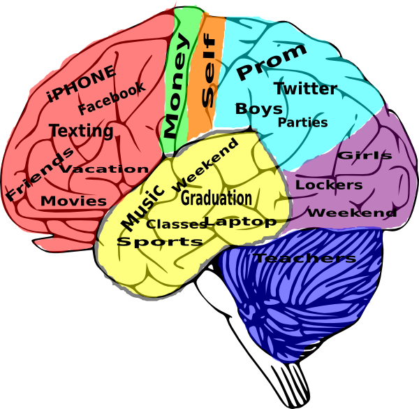Unlabeled Brain Diagram Thing That You Need To Learn or