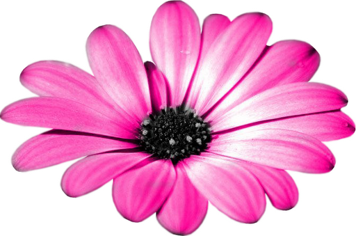 Free High Resolution Graphics And Clip Art: Png Flowers - Cliparts.co