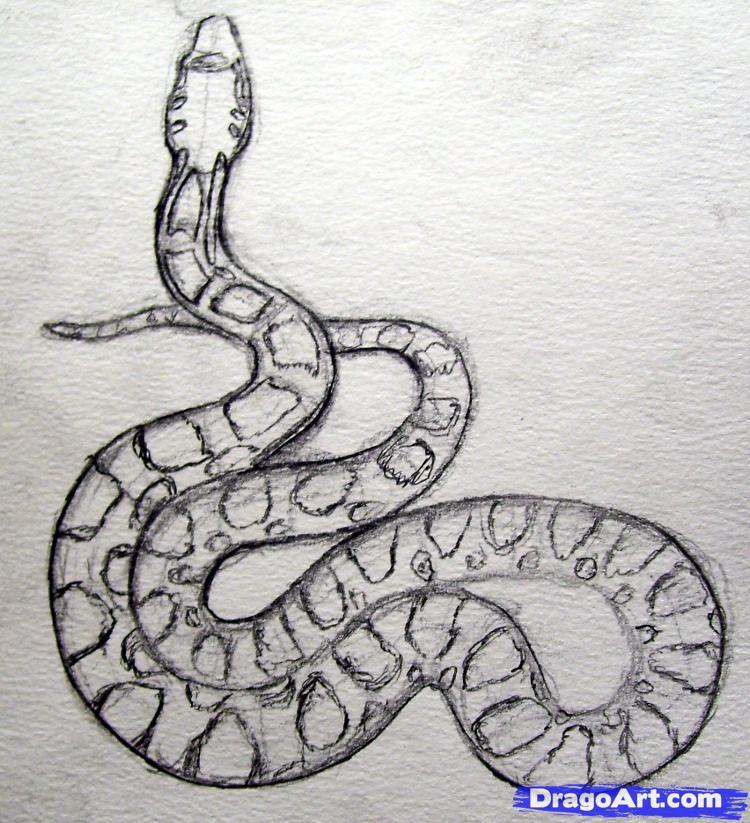 Cartoon rattlesnake drawing