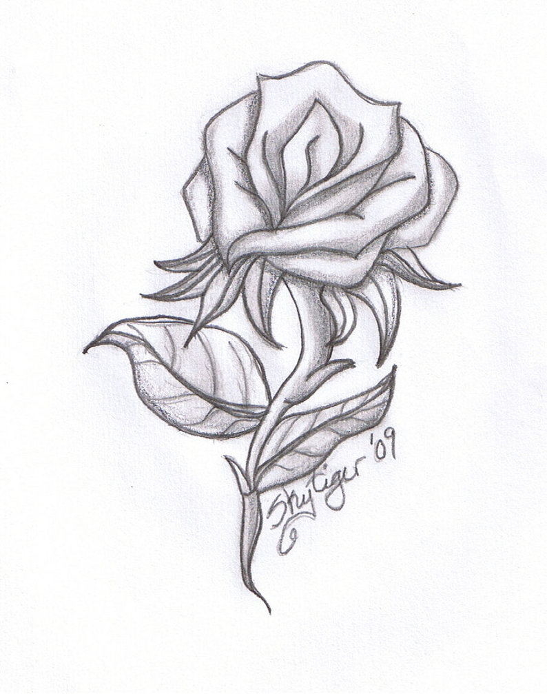 Hoontoidly Roses Tumblr Drawing Images