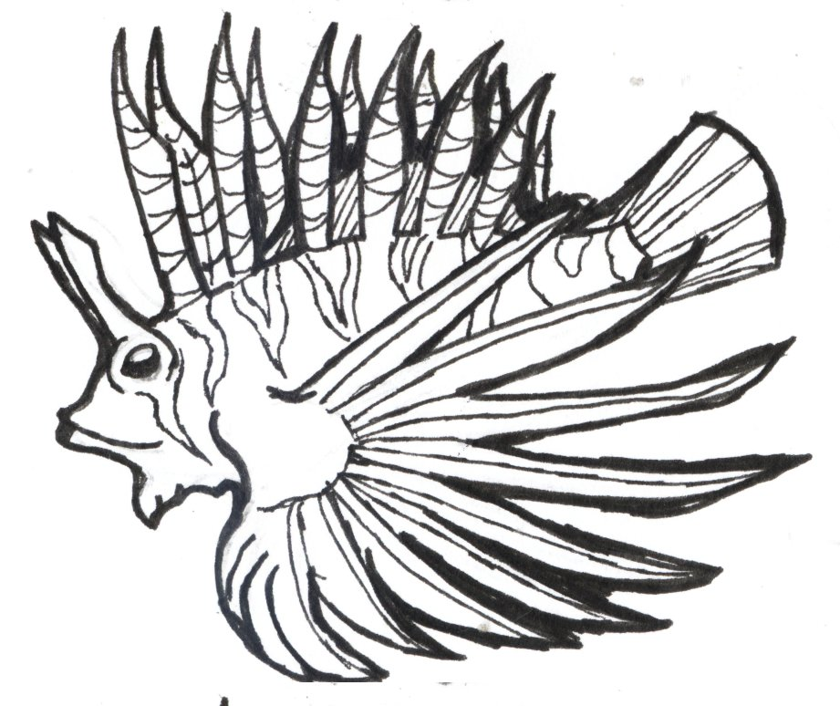 lion fish outline colouring pages page 2 clipartsco
