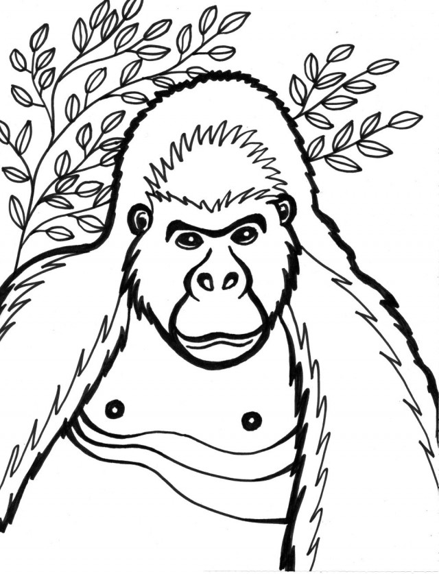 ape coloring pages printable-#7
