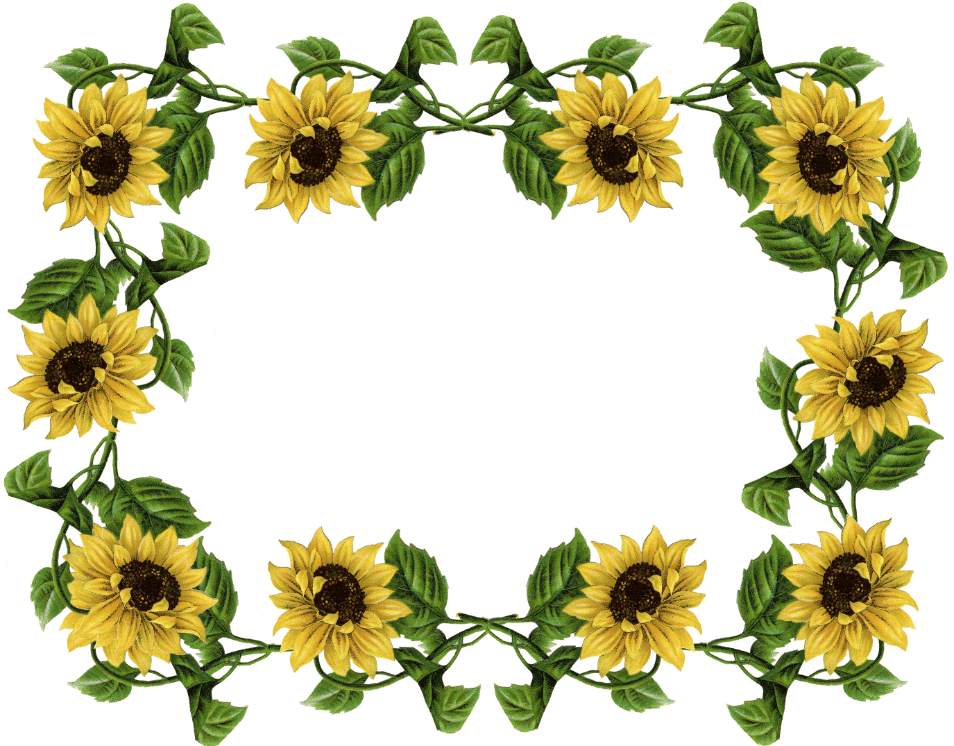 Sunflower Border Clip Art - Cliparts.co