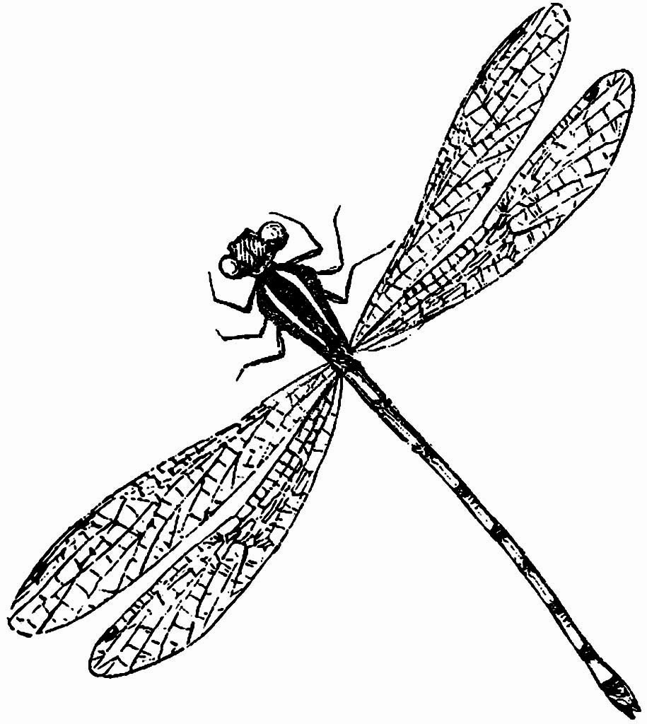 Dragon Fly Drawings Clipartsco