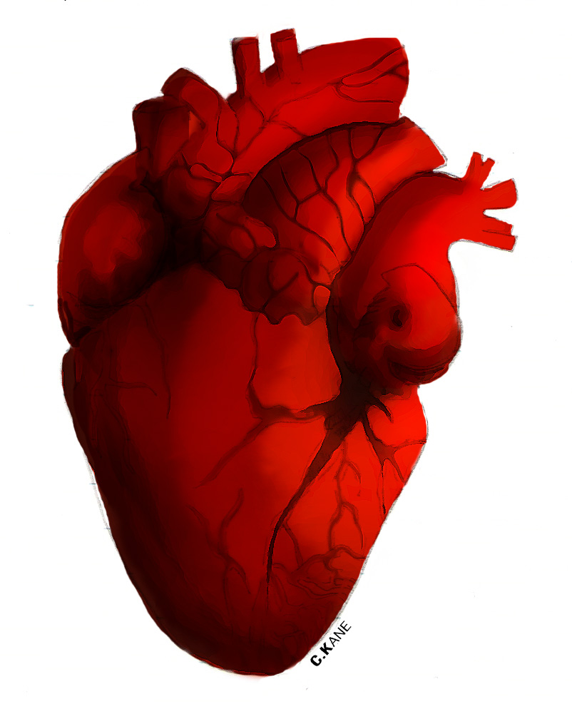 clipart of a human heart - photo #16
