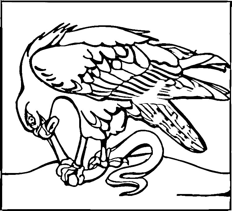Pin Seattle Seahawks Coloring Page Opens A New Window ...