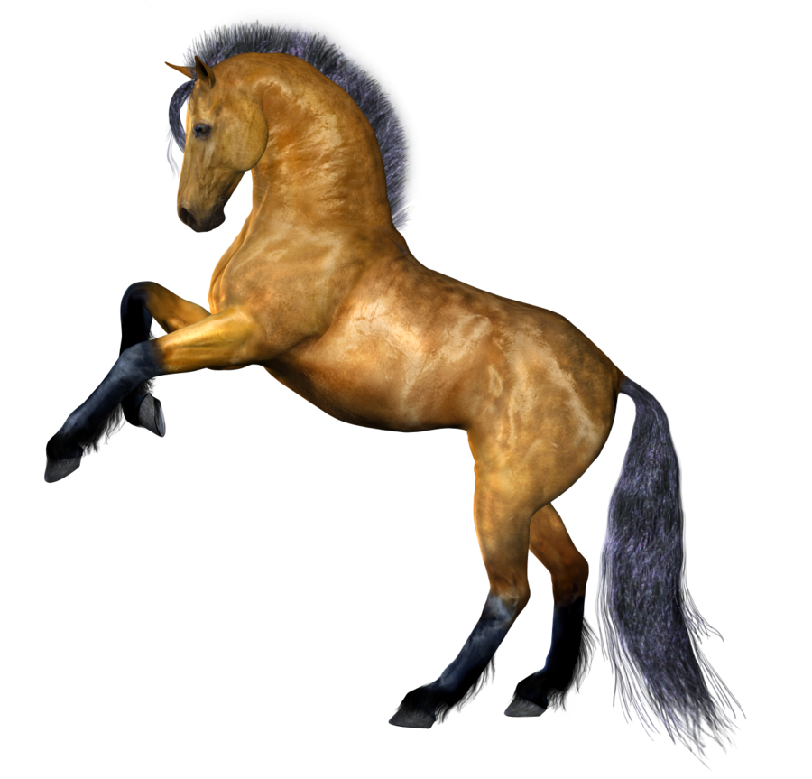Horse png image, free download picture