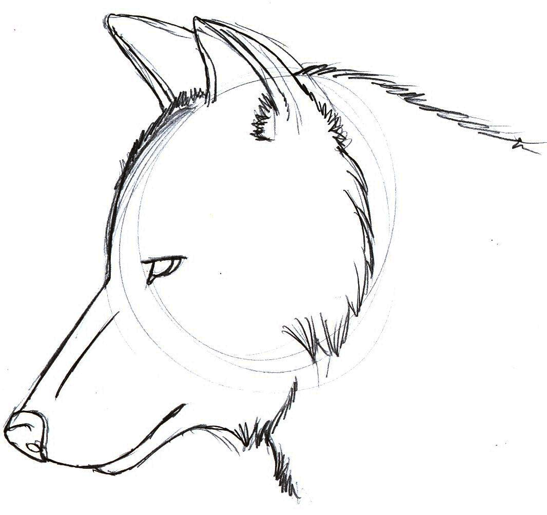 Wolf Head Drawing Simple Images amp Pictures Becuo