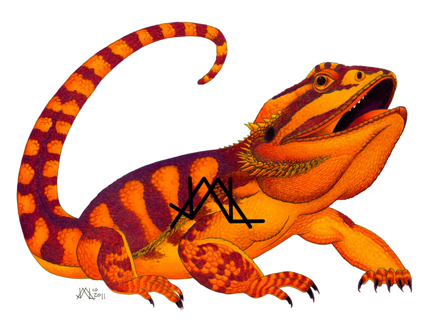 cartoon bearded dragon clipartsco