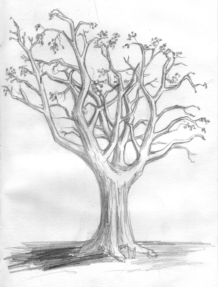 Tree drawings for 3d sketch online