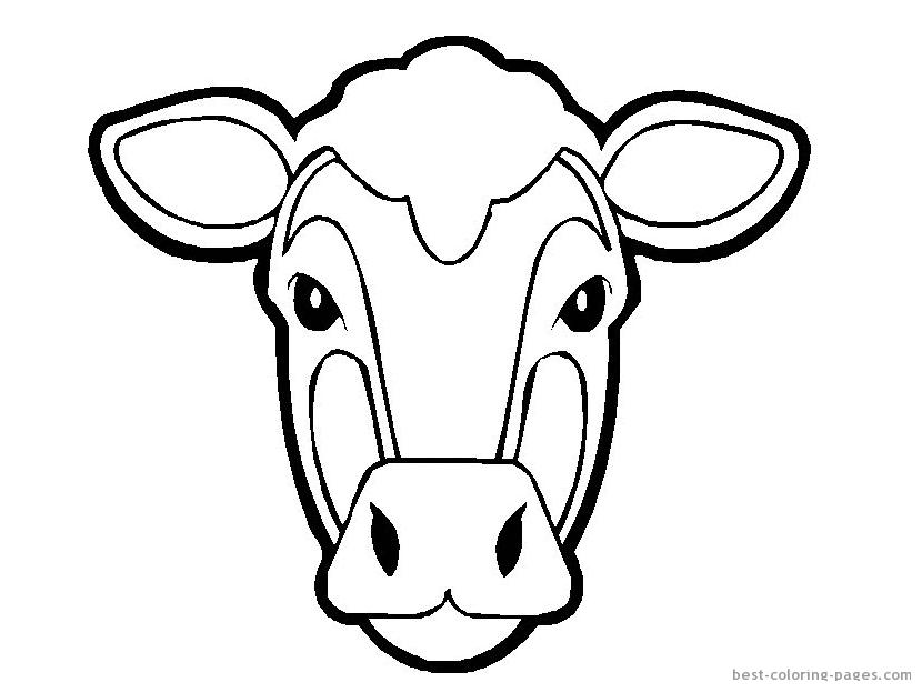 Cartoon Cows Face