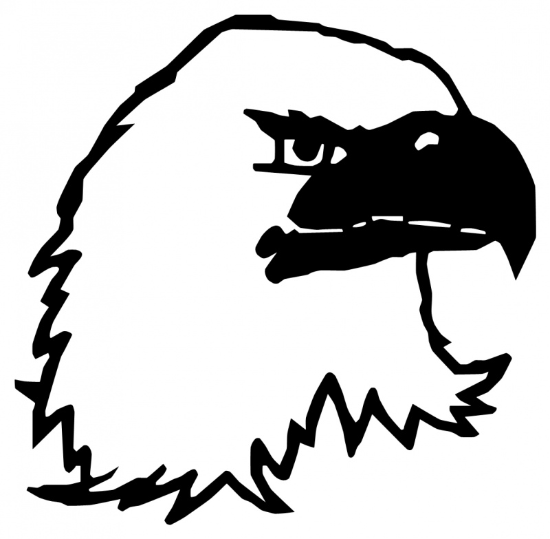 Bald Eagle Head Images