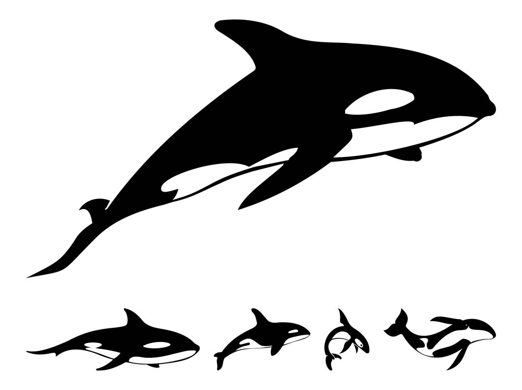 Orca Whale Clipart